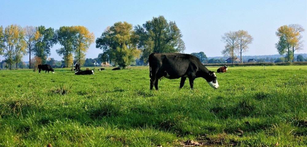 how to keep cows away from plants
