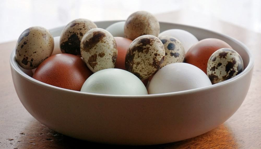 Quail chicken and duck eggs (1)