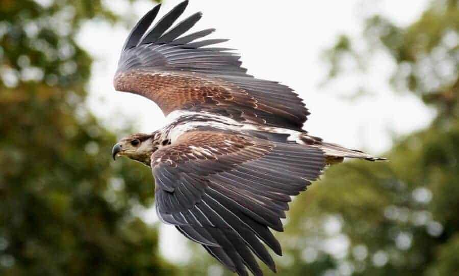 Be-aware-of-hawk-migrations-1