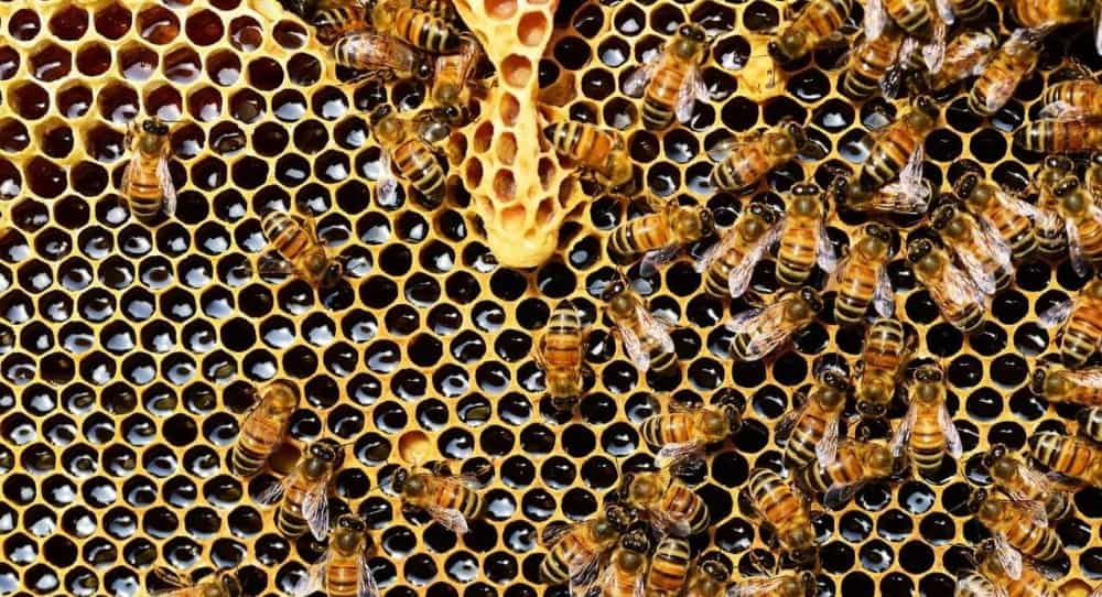 Bees require little work for the income they provide1 (1)