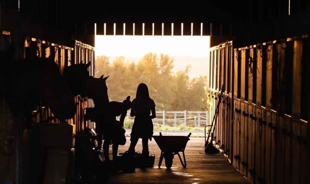 most profitable livestock for farms1 (1)