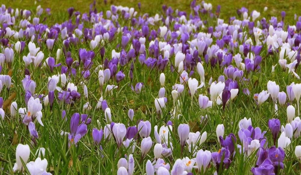 Allow some of your lawn to grow into a wild space for bees (2)