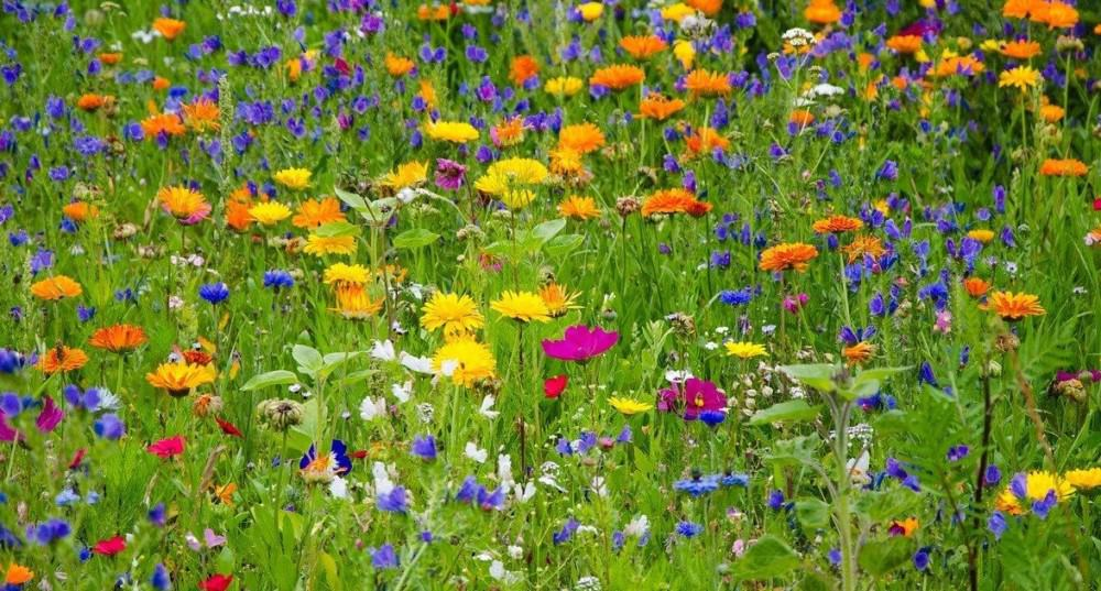 Create a bee garden with local flowers (2)