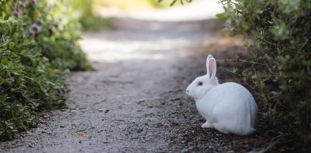 Rabbits have effective digestive systems 1