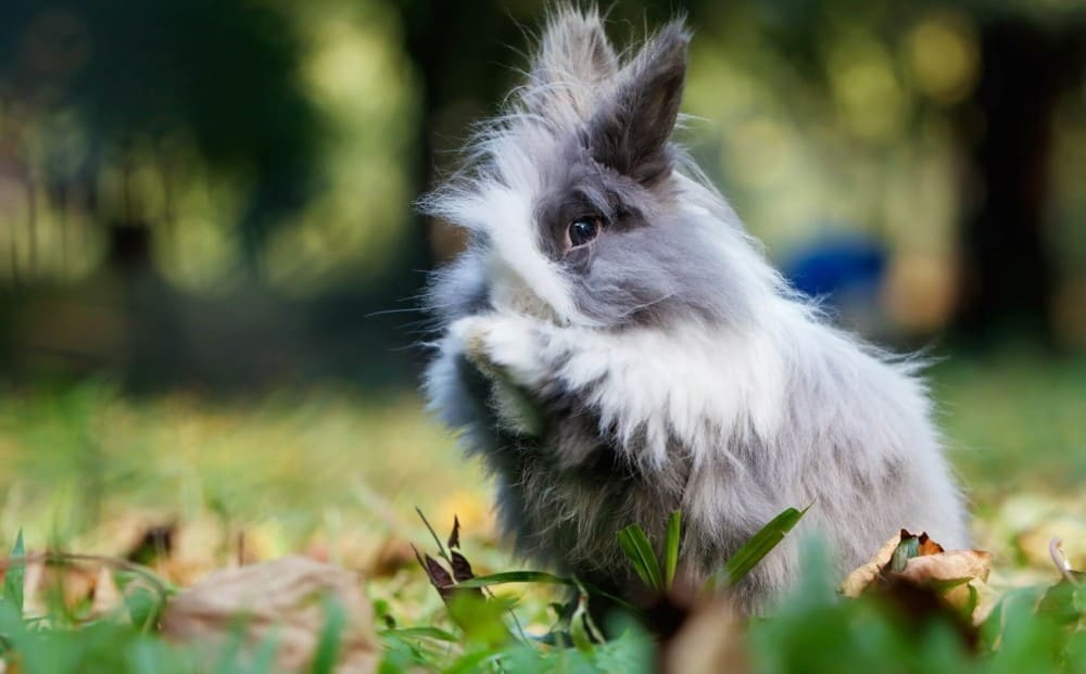 Rabbits should eat mostly hay 1