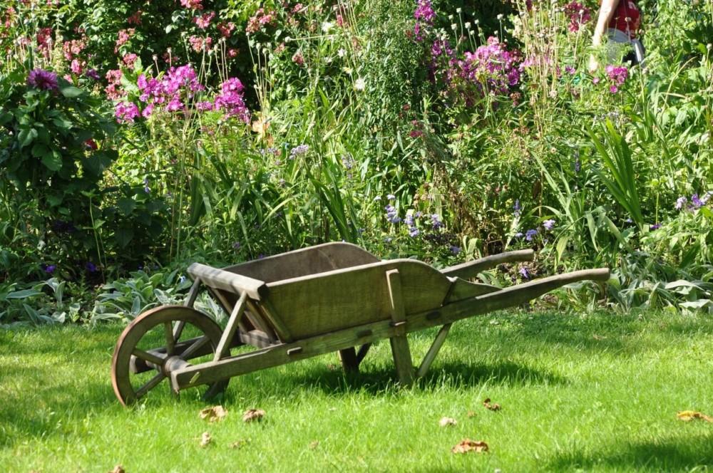 Create a flower garden free of allergens (1)