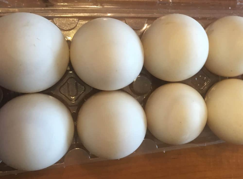 Collect eggs reguarly to keep ducks laying daily