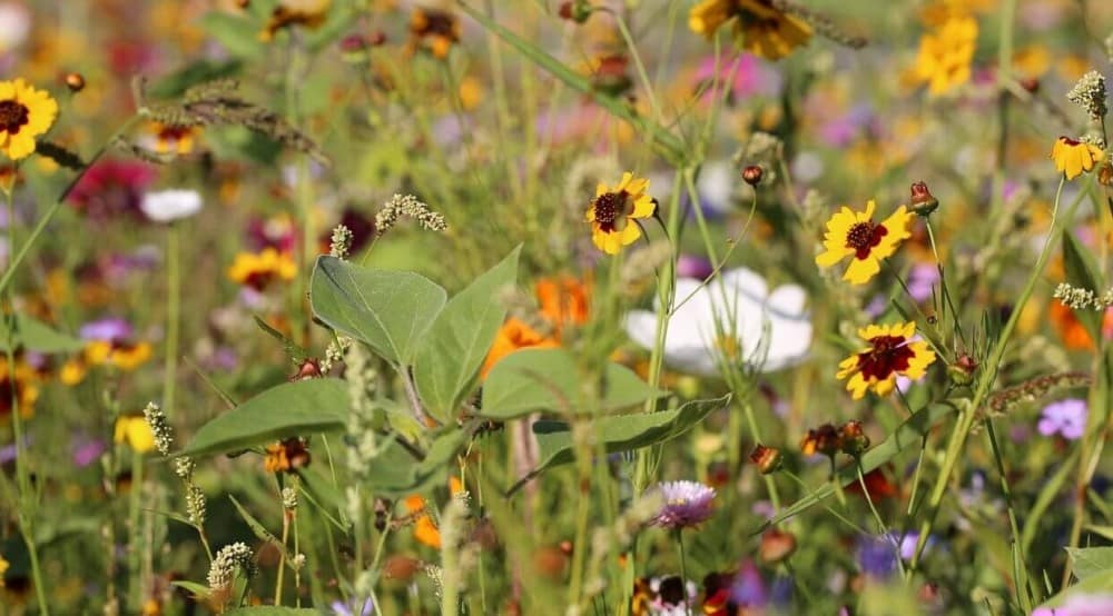 Grow a bee garden with flowers that attract bees (2)