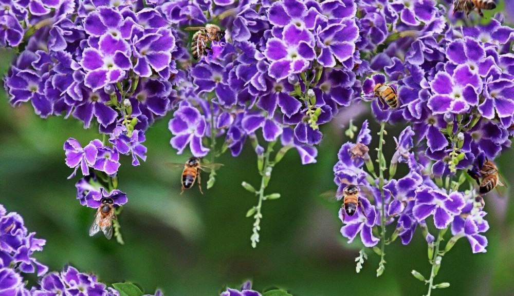 Grow a variety of flowers for different bee species (2)
