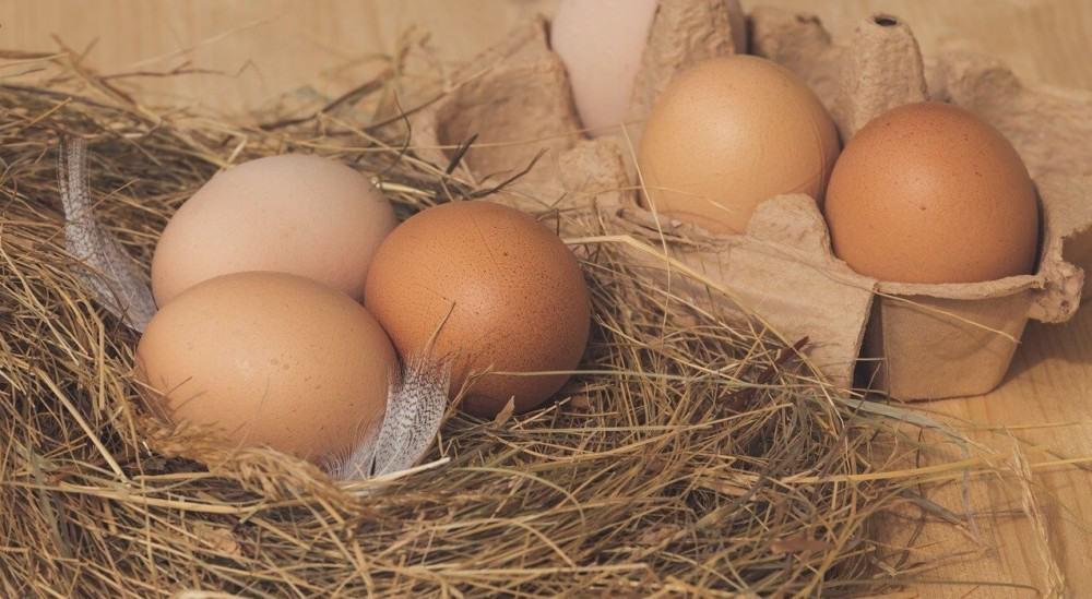 Keep fresh eggs safe from hens (2