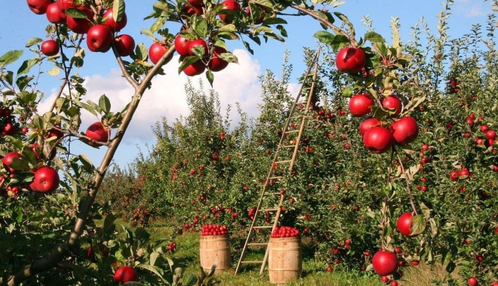 Most fruit trees depend on trees for pollination (2)