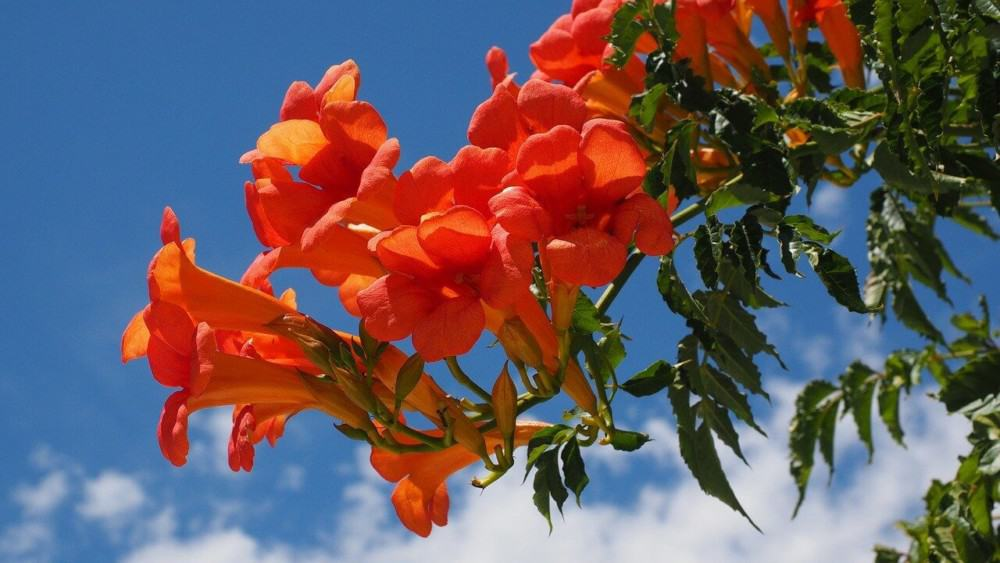 Tubal flowers keep the pollen inside (1)