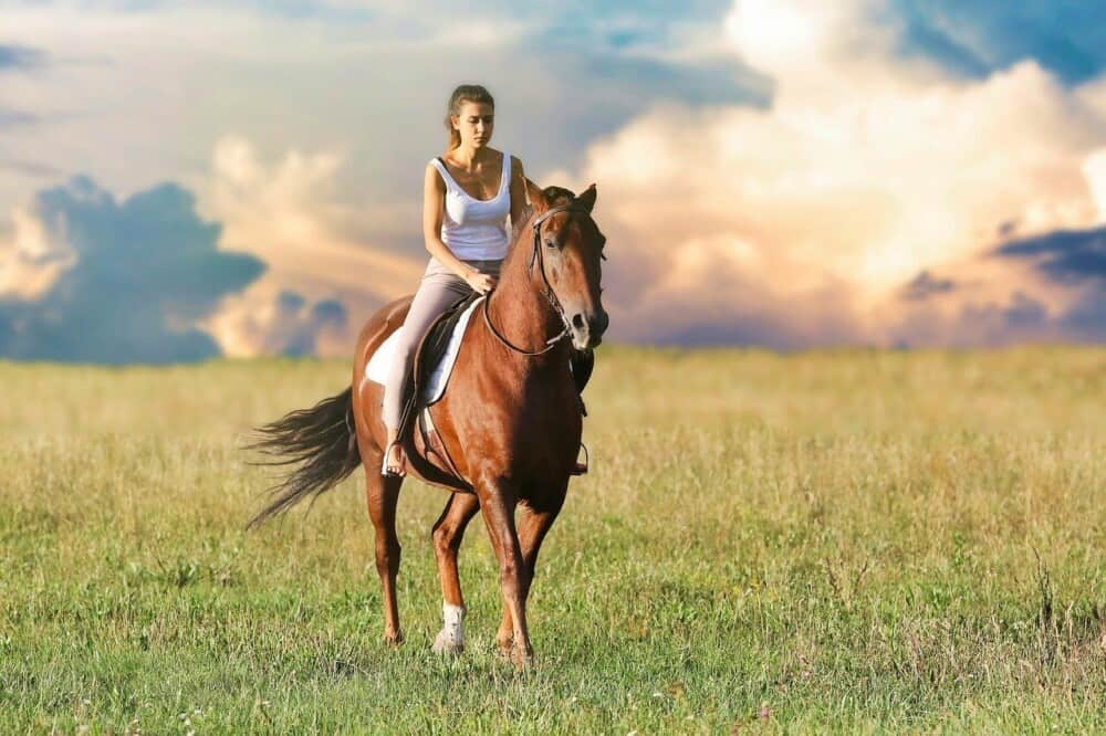 Causes of Gas in Horses (1)
