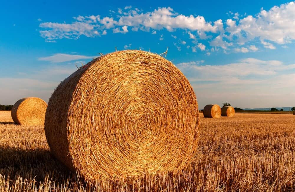 Grass hay mixed with alfalfa is healthy for horses