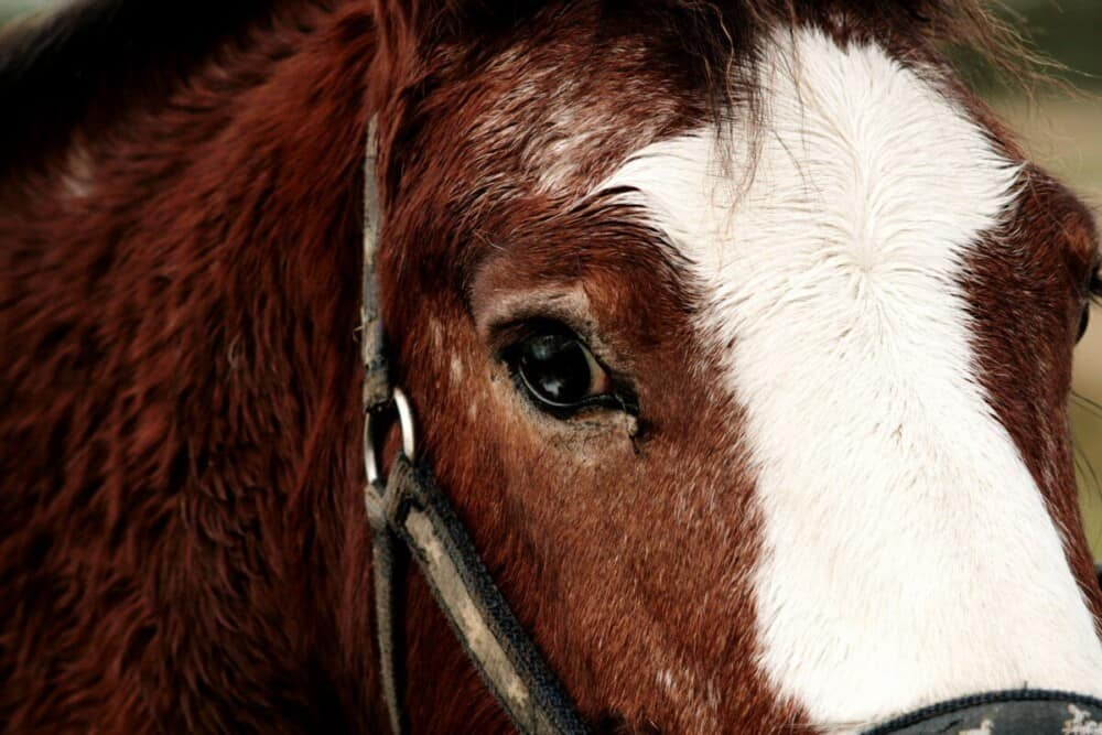 HOw to evaluate a horse before buying (1)