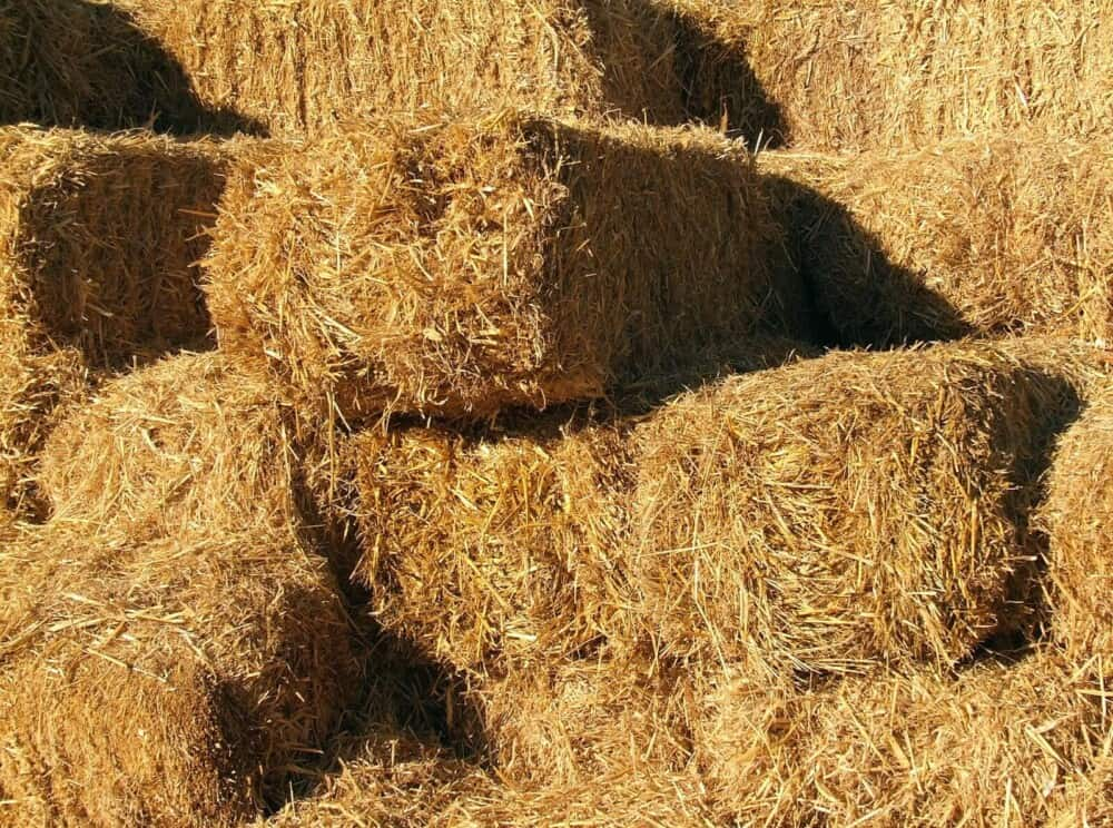Hay should have lots of leaves to stems