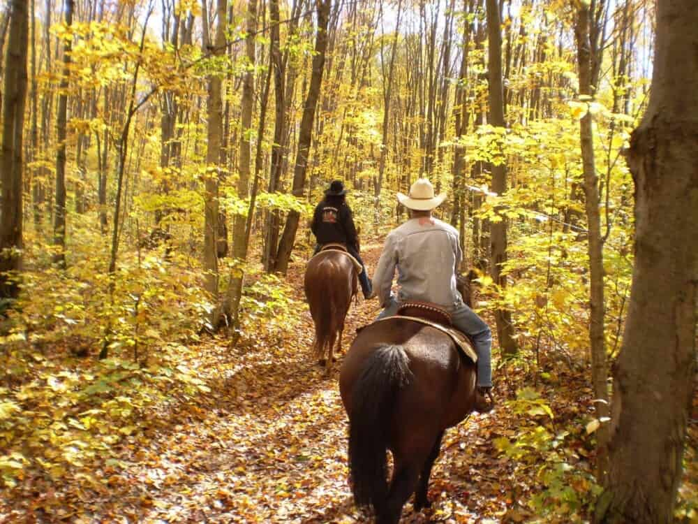 Horse breed affects distance they can travel (1)