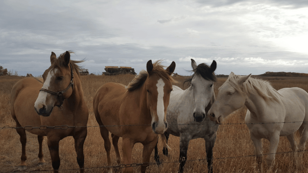 Maximum Carrying Weight for Horseback riding (1)