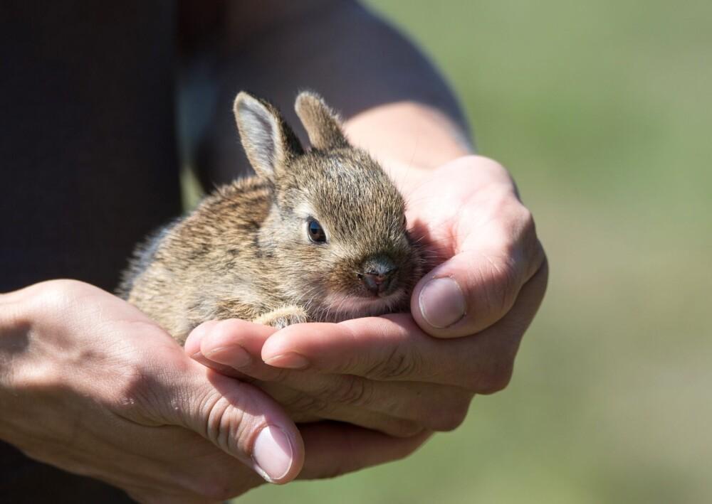 Rabbit breeding information (1)