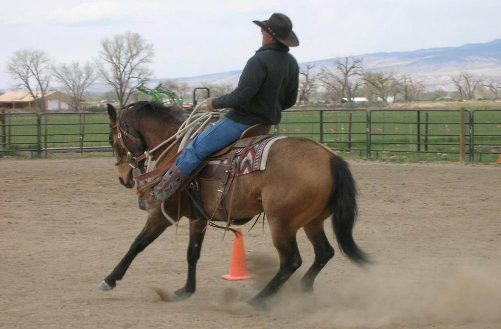 Riding horses with ulcers requires care (1)