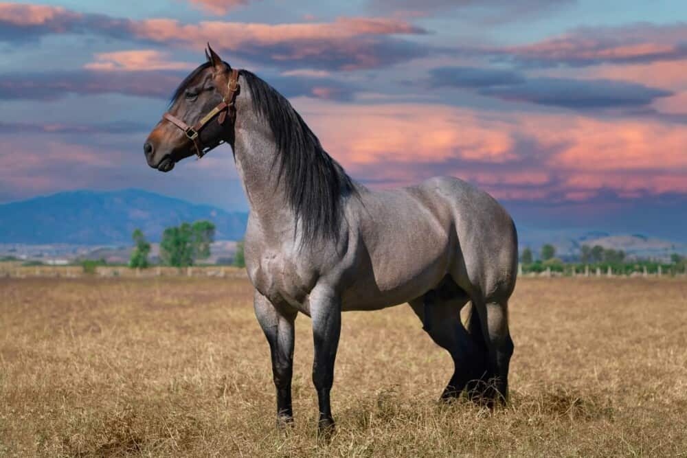 Stallions can affect the reproductive capacity of offspring (1)