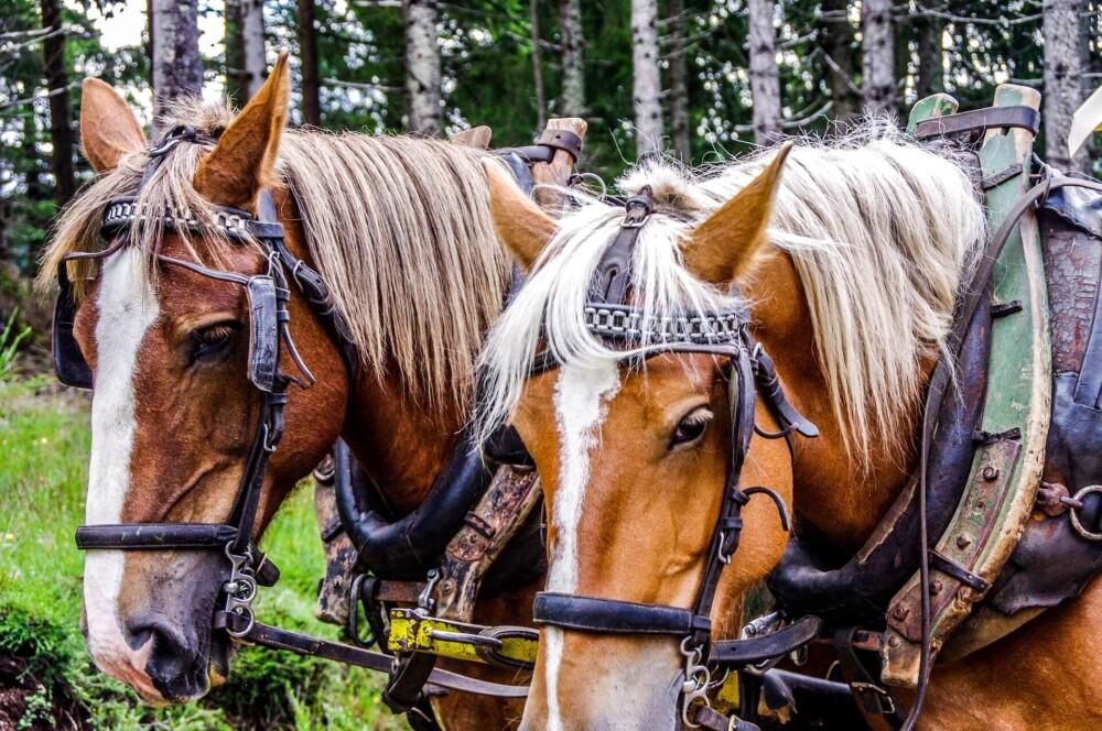 Terrain affects endurance of horses (1)