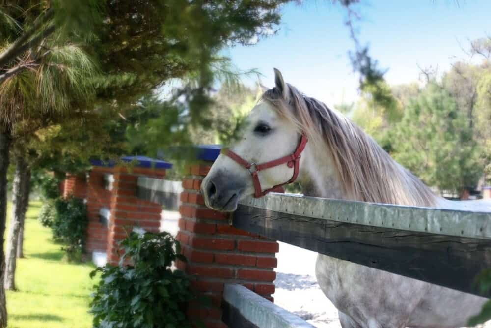 What to look for in a horse before buying (1)
