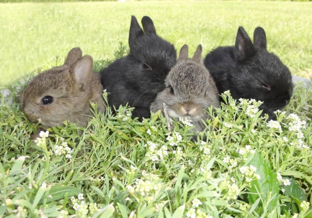 rabbits reproduce quickly (1)