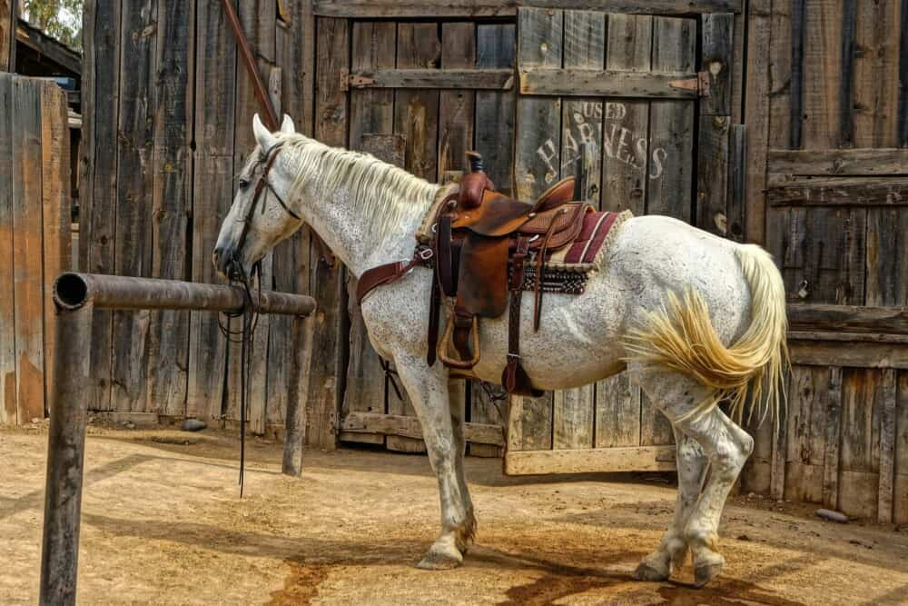 Horses can live to 40 years old (1)