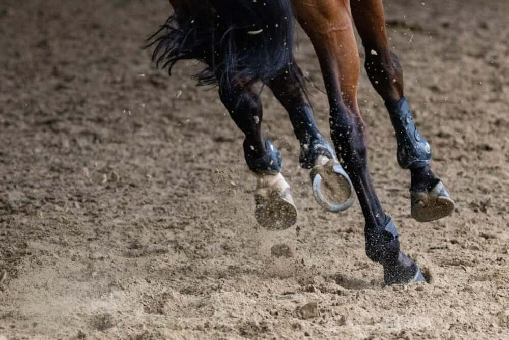 Horseshoes are often used for rough terrain and sports (1)