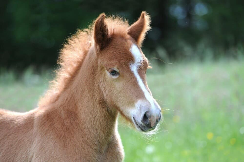 The life expectancy of a horse depends on many factors (1)