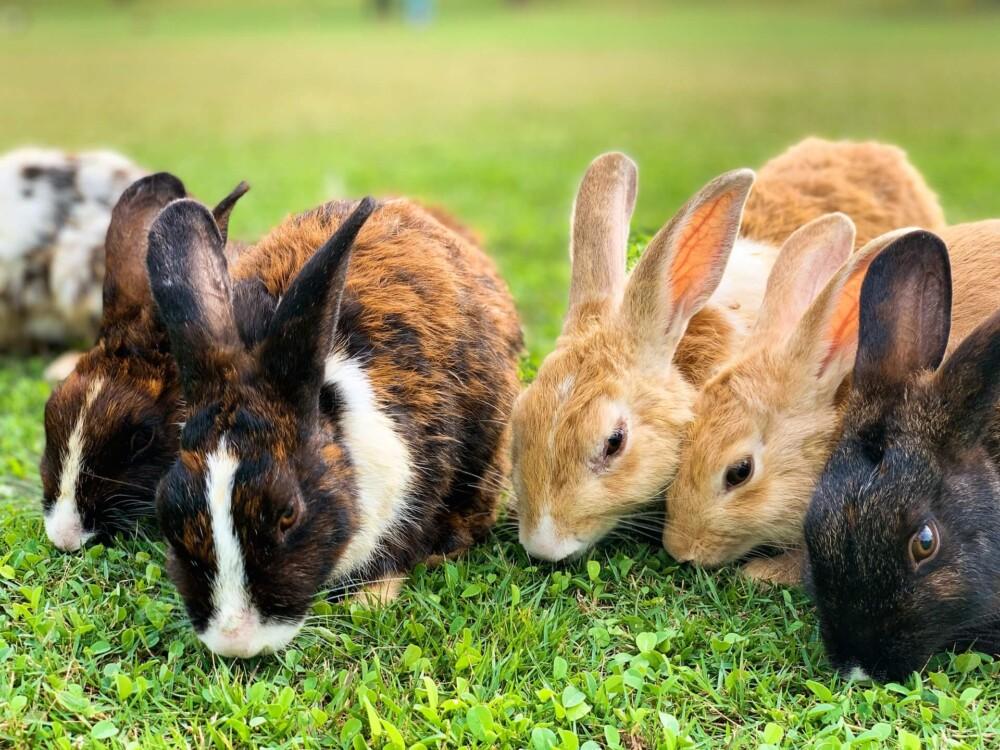Treat a hurt rabbit leg immediately (1)