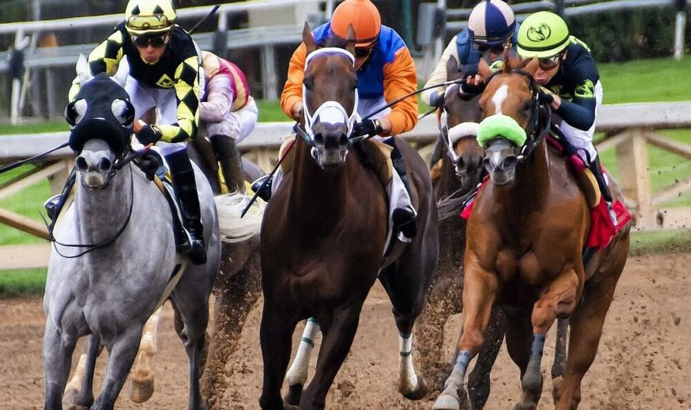 Racing horses wear eye covers to keep them from distraction (1)