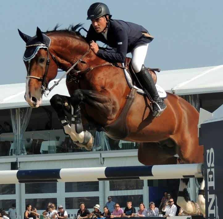 warmblood horse breeds are the most popular for show jumping (2)