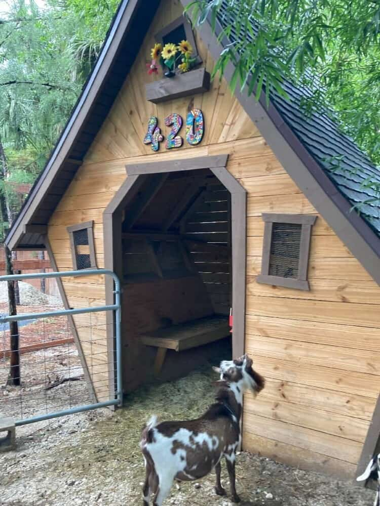 60% of goat owners lock their goats up at night (1)