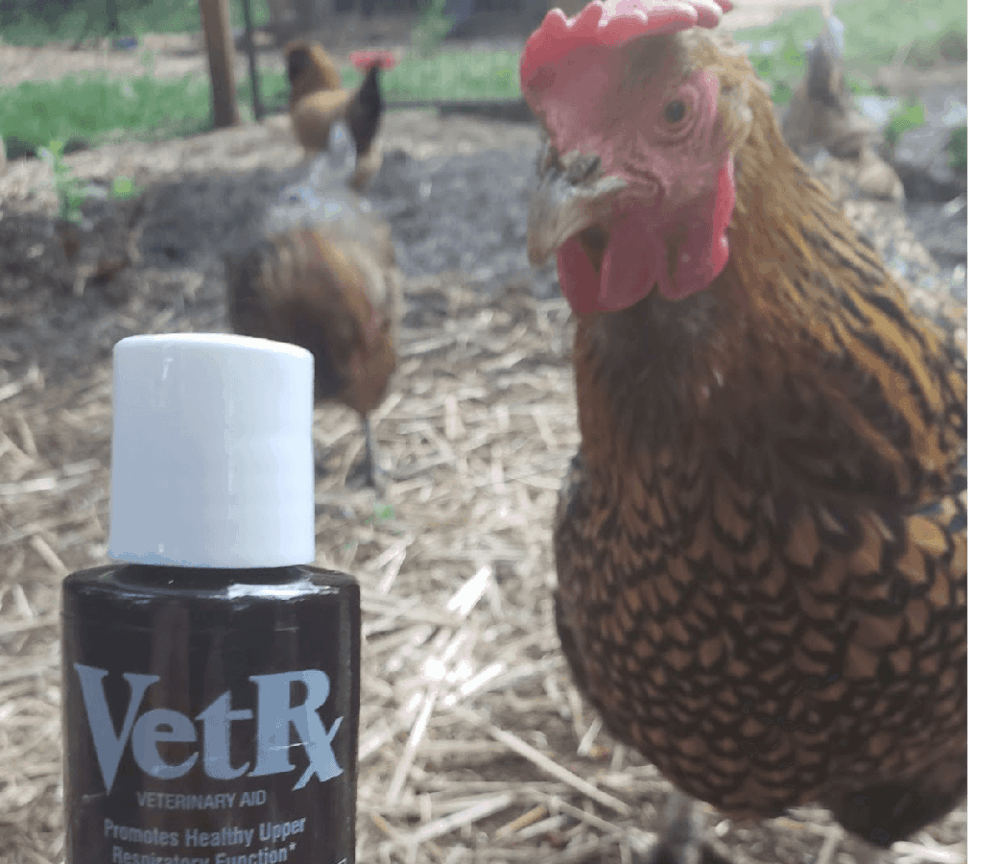 First Aid for sneezing chickens (1)
