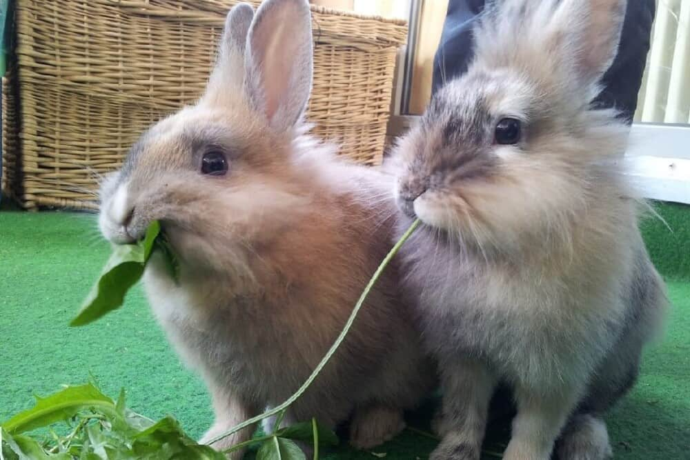 Forbidden foods of rabbits (1)