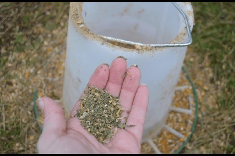Herbs can help sneezing hens (1)