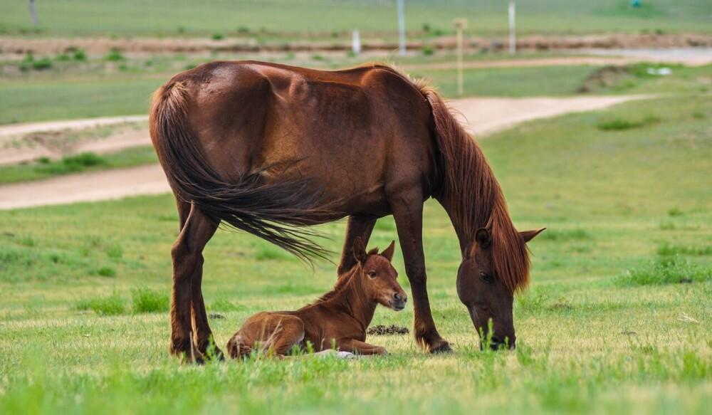 Preventing Horse Fungus (1)
