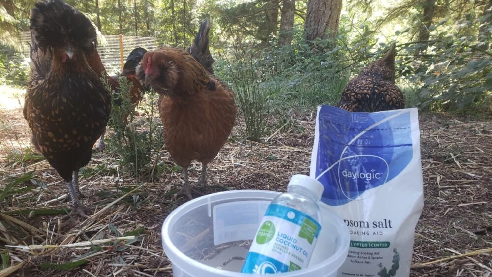 Remedies for egg bound hens
