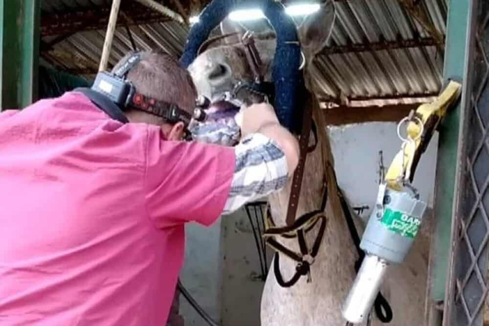 Should my horse see a dentist (1)