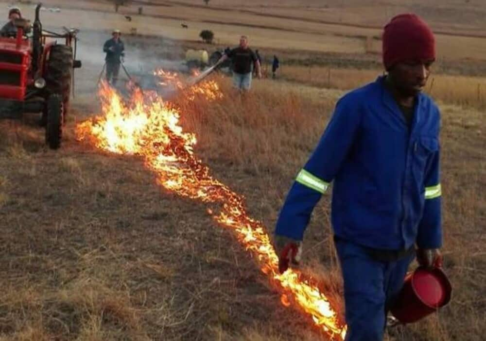 A fireline keeps wildfires under control (1)
