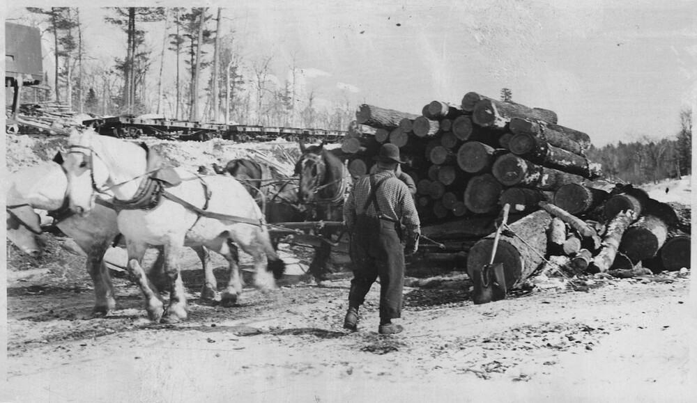 Draft horses have carried large weights of logs and equipment (1)