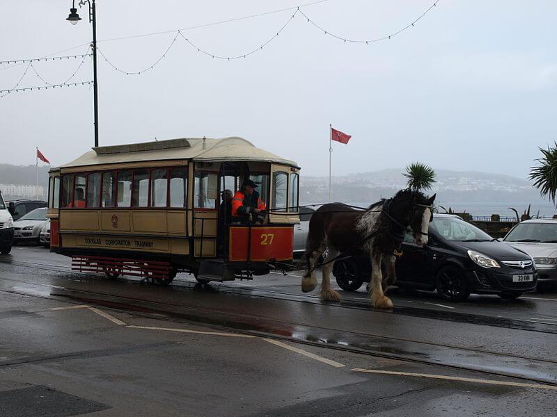 Draft horses pull a trolley (1)