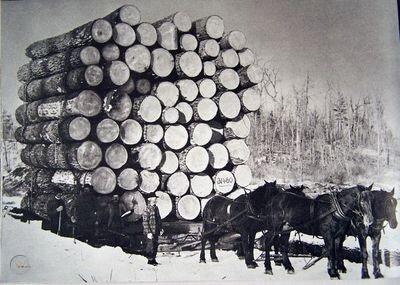 Draft horses pull logging wagon (1)