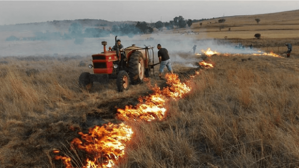 Firebreaks are controlled burns to protect property (1)