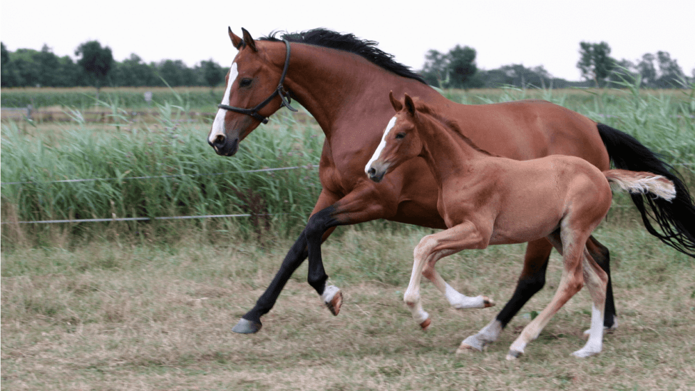 Horses and donkeys have genetic differences (1)