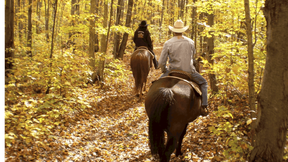 Riding a skittish horse takes training for the horse (1)