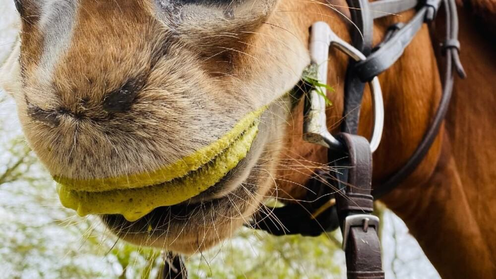 Slobbering Horses aren't cause for concern (1)