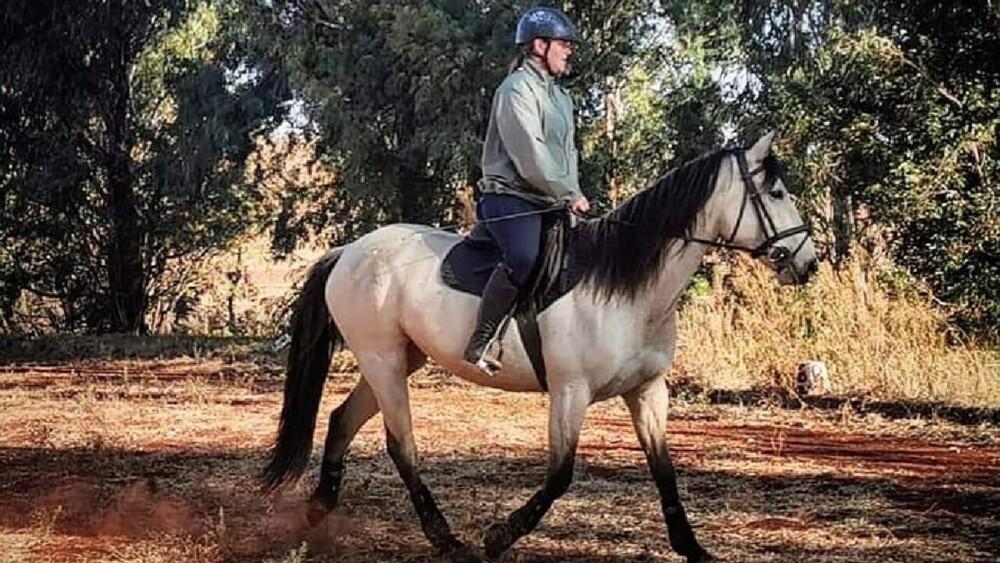 calming a nervous horse (1)